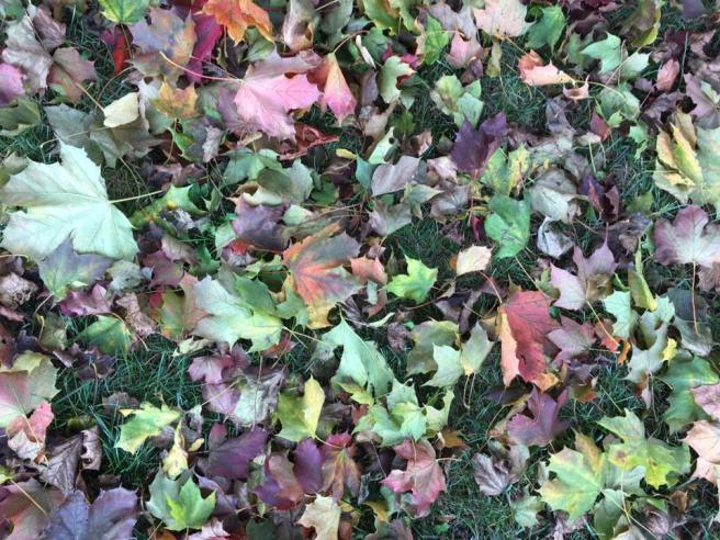 blanket-leaves
