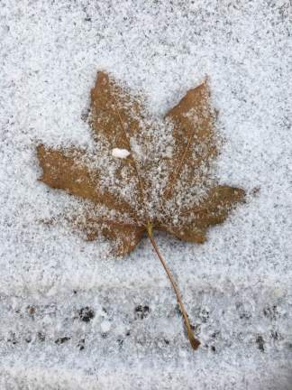 maple-leaf-snow