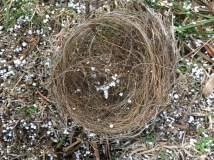 nest-snow-grass