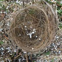 nest-snow-grass