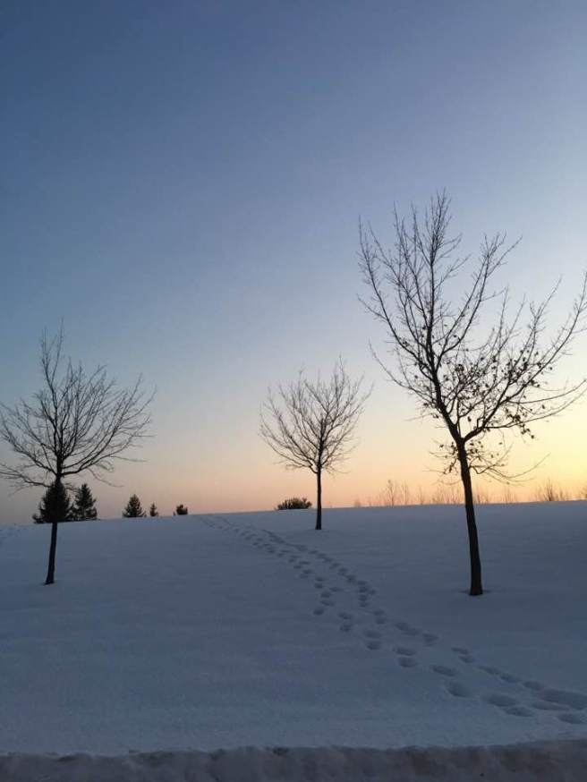 path-trees-snow