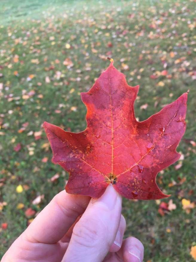 red-leaf-remembrance-day
